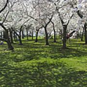 Under The Cherry Blossoms - Washington Dc. Art Print