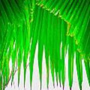Under The Fan Palm Art Print