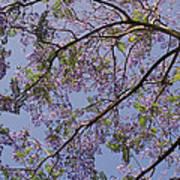 Under The Jacaranda Tree Art Print