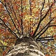 Under The Leaves Art Print
