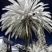 Under The Palm Tree Art Print