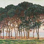 Under The Pines. Evening Art Print