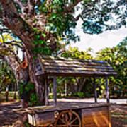 Under The Shadow Of The Tree. Eureka. Mauritius Art Print