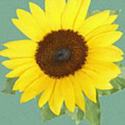 Under The Sunflower's Spell Art Print