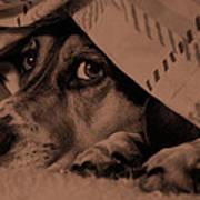 Undercover Hound Art Print