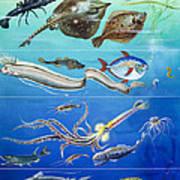 Underwater Creatures Montage Art Print