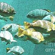 Underwater Fish Swimming By Art Print