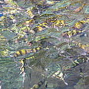Underwater - Long Boat Tour - Phi Phi Island - 011325 Art Print