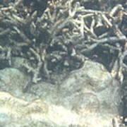 Underwater - Long Boat Tour - Phi Phi Island - 011340 Art Print