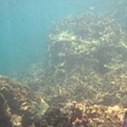 Underwater - Long Boat Tour - Phi Phi Island - 011381 Art Print by DC Photographer