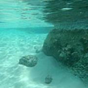 Underwater Tropical Island Photography Art Print