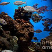 Underwater View Art Print