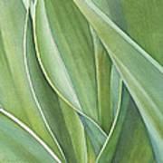 Unfolding Tulip Leaves Art Print