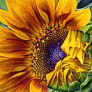 Unfurling Beauty - Cropped Version Art Print