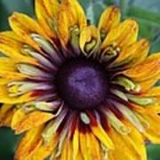 Unique Sunflower Art Print
