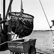 Unloading Fish From Monterey's Wharf Two Circa 1950  Art Print