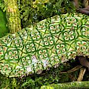 Unripe Anthurium Fruit Art Print