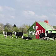 Up Mayo Art Print