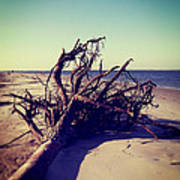 Uprooted Tree On The Beach Art Print