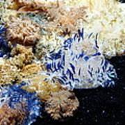 Upside Down Jelly Fish 5d24947 Art Print