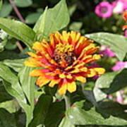 Us Botanic Garden - 121221 Art Print