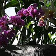 Us Botanic Garden - 121231 Art Print