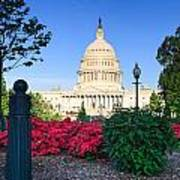 Us Capitol And Red Azaleas Art Print