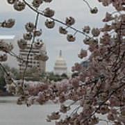 Us Capitol - Cherry Blossoms - Washington Dc - 01133 Art Print