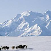 Usa, Alaska, Sled Dogs, Park Ranger Art Print