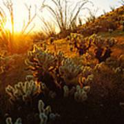 Usa, Arizona, Sonoran Desert, Ocotillo Art Print