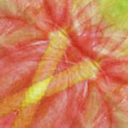 Usa, Hawaii Anthurium Flower Montage Art Print