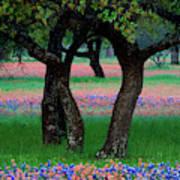 Usa, Texas, Hill Country, Texas Art Print