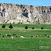 Utah Farm Cows Art Print