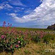 Valerian By A Stone Wall On The Northumberland Coast Art Print