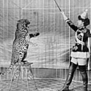 Vallecitas Leopards. Female Animal Art Print