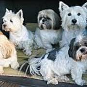 Van Doggies Art Print