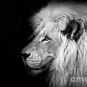 Vegas Lion - Black And White Art Print by Ian Monk