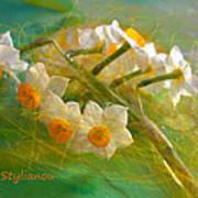 Veil On  Narcissus Art Print