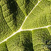 Veins Of A Leaf Art Print