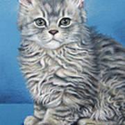 Velvet Kitten Art Print