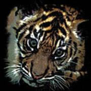 Velvet Tiger Cub Art Print