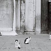 Cats Of Venice Art Print