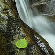 Vermont Aspen Leaf Waterfall Camels Hump Duxbury Art Print