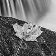 Vermont Autumn Maple Leaf Black And White Art Print