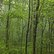 Vermont Mount Mansfield Green Forest Fog Panorama Art Print