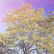 Vermont Tree Light Leak Sunflare  Art Print