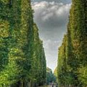 Versailles Promenade Art Print