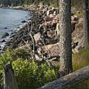 Vertical Photograph Of The Rocky Shore In Acadia National Park Art Print