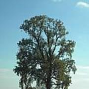 Vertical Tree Art Print