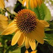 Vertical Yellow Flowers Art Print